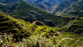 Tapeta ancient rice terraces philippines